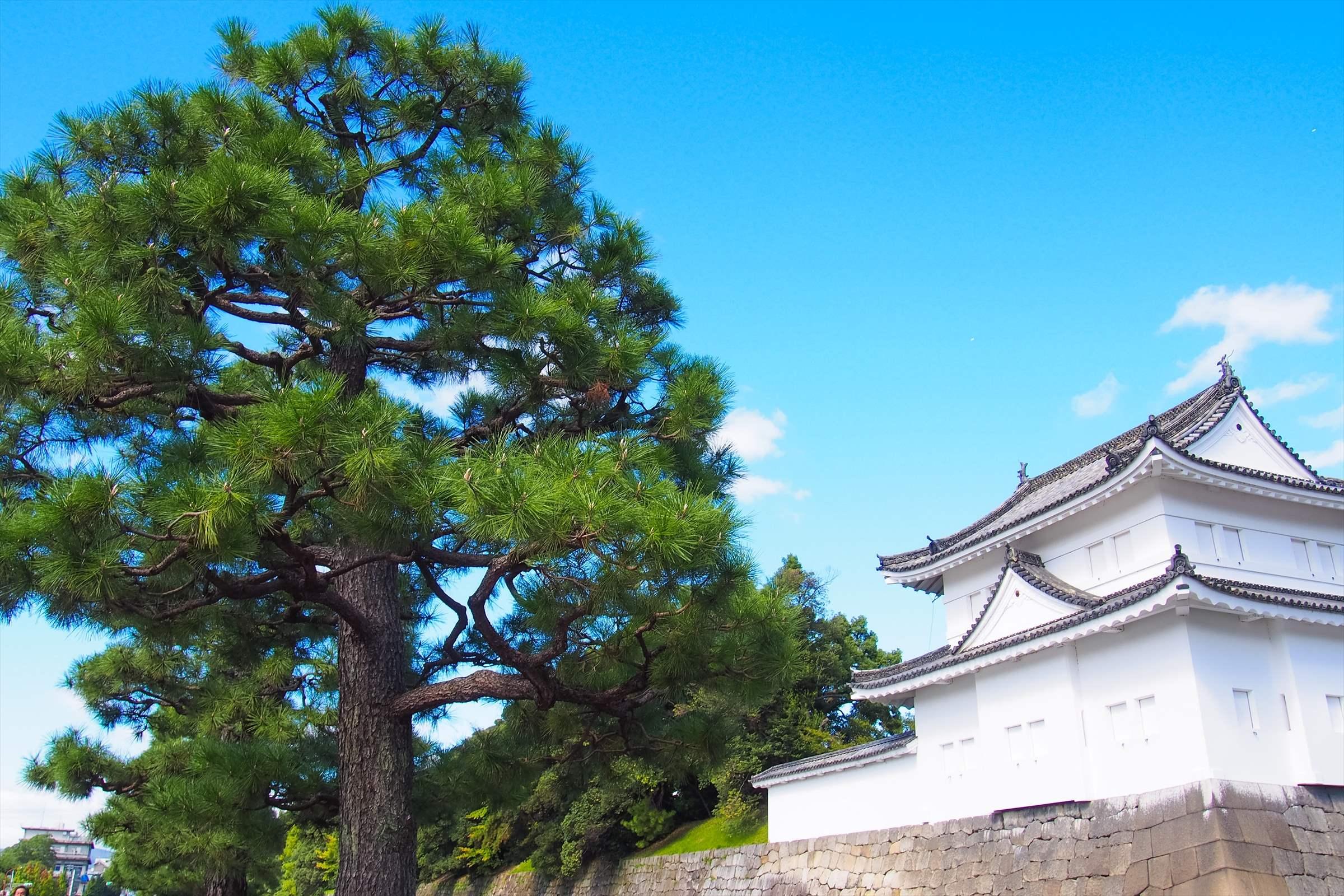 京都観光モデルコース2